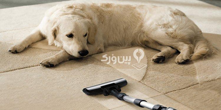 ترس حیوان خانگی از جاروبرقی