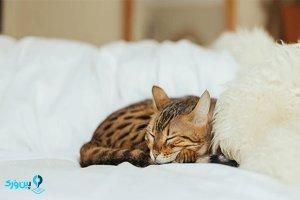 مراقبت از گربه در زمستان