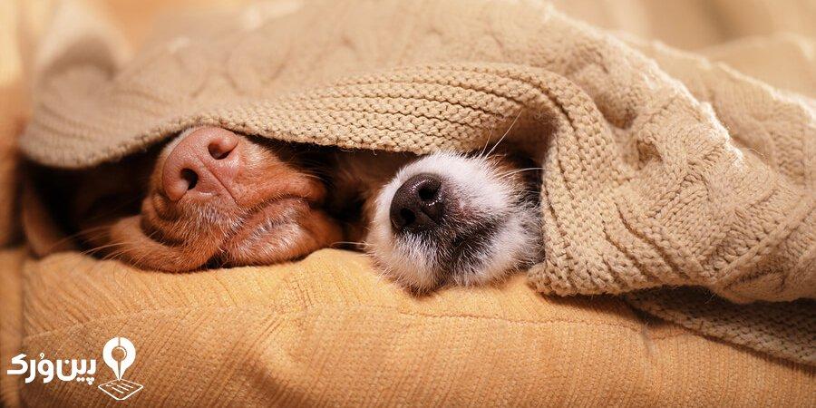 نگهداری از حیوانات خانگی در زمستان