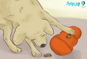 سرگرم کردن سگ