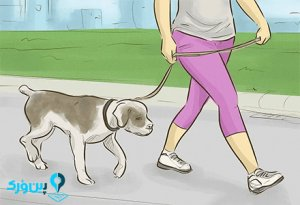 گردش با سگ