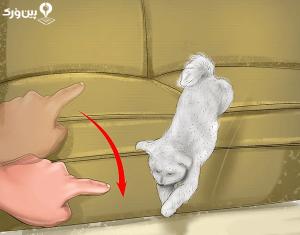 عادت های حیوان خانگی