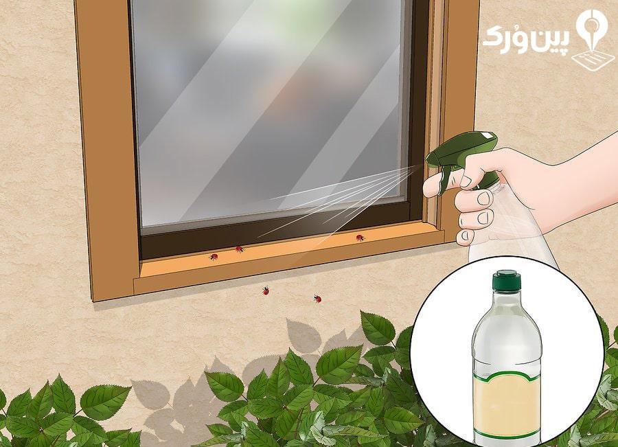 نحوه از بین بردن حشرات خانگی با سرکه