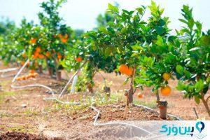 نحوهی کاشت درخت پرتقال