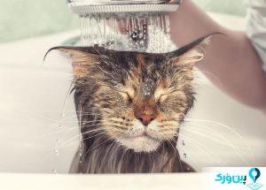 شستن حیوان خانگی