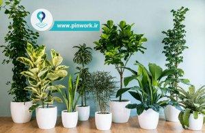 عناصر کود گیاهان آپارتمانی
