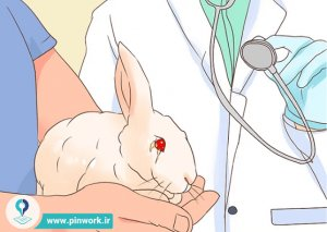درمان خرگوش