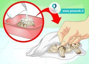 شستشوی لاکپشت