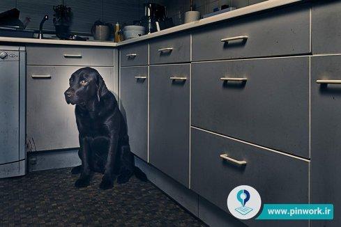 هراس سگ