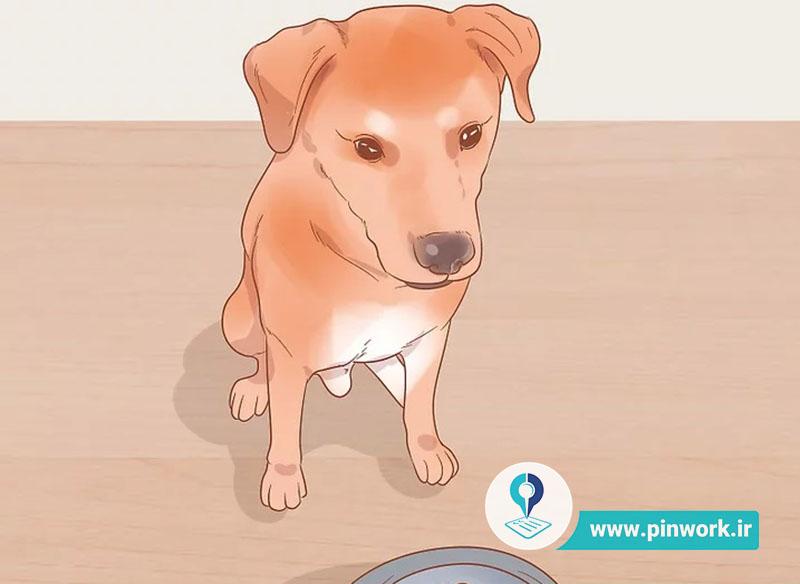 بیماری سگ