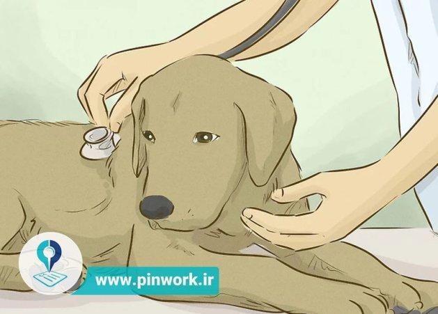 مراقبت کردن از سگ
