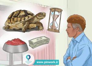 نحوه خرید لاکپشت